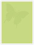 Designvorlage Schmetterlinge - Innenseite links