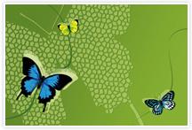 Designvorlage Schmetterlinge - Umschlag