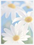 Designvorlage Blumen - Innenseite links