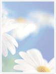 Designvorlage Blumen - Innenseite rechts