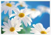 Designvorlage Blumen - Umschlag