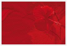 Designvorlage Hibiscus - Umschlag
