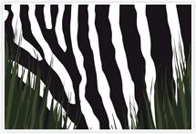 Designvorlage Safari1 - Umschlag