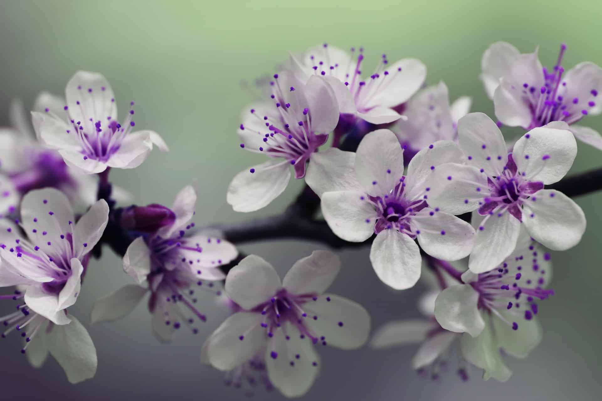 Die schöne Natur im eigenen Garten