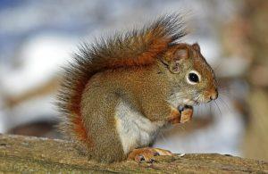 Tiere fotografieren und die Natur entdecken