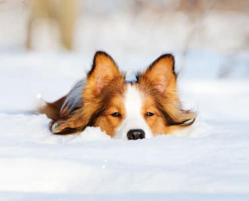 Hund im Schnee