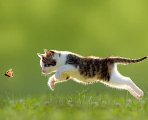 Katze auf Wiese